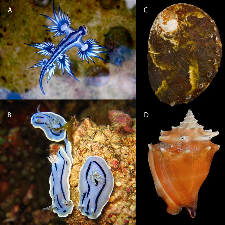 Mollusks - Figure09