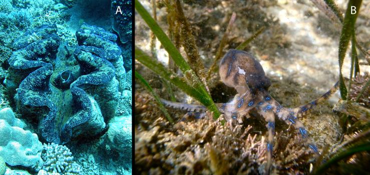 Mollusks - Figure12