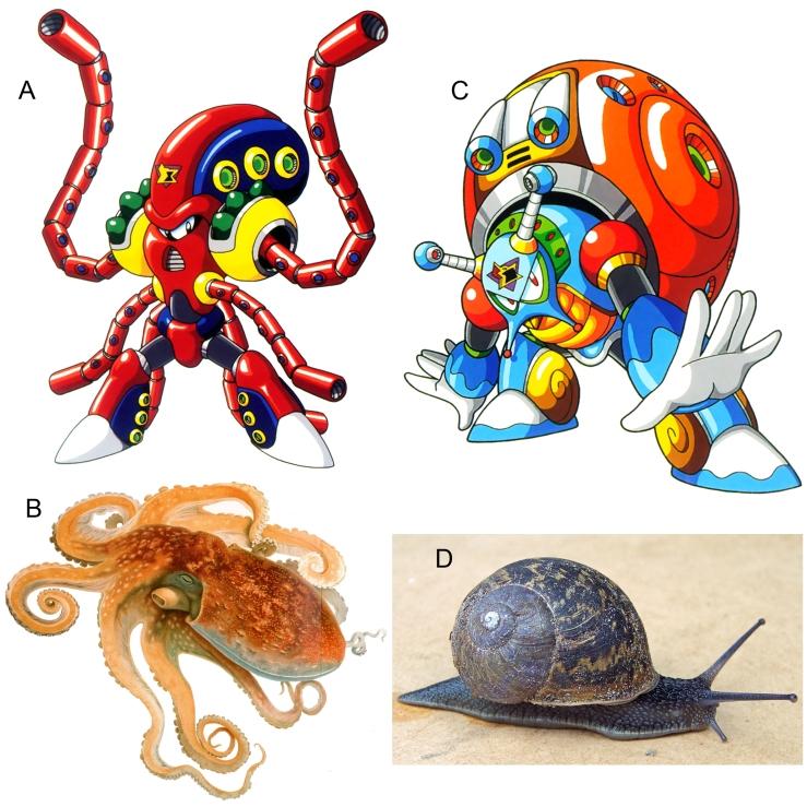 Mollusks - Figure15