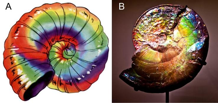 Mollusks - Figure17