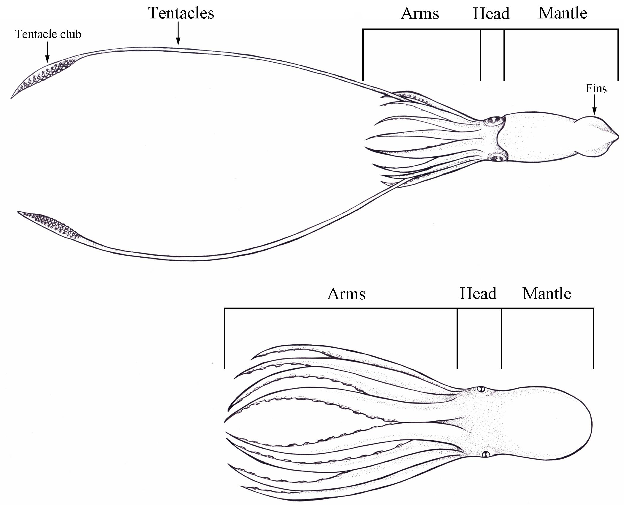 Squids, octopuses and lots of ink | Journal of Geek Studies