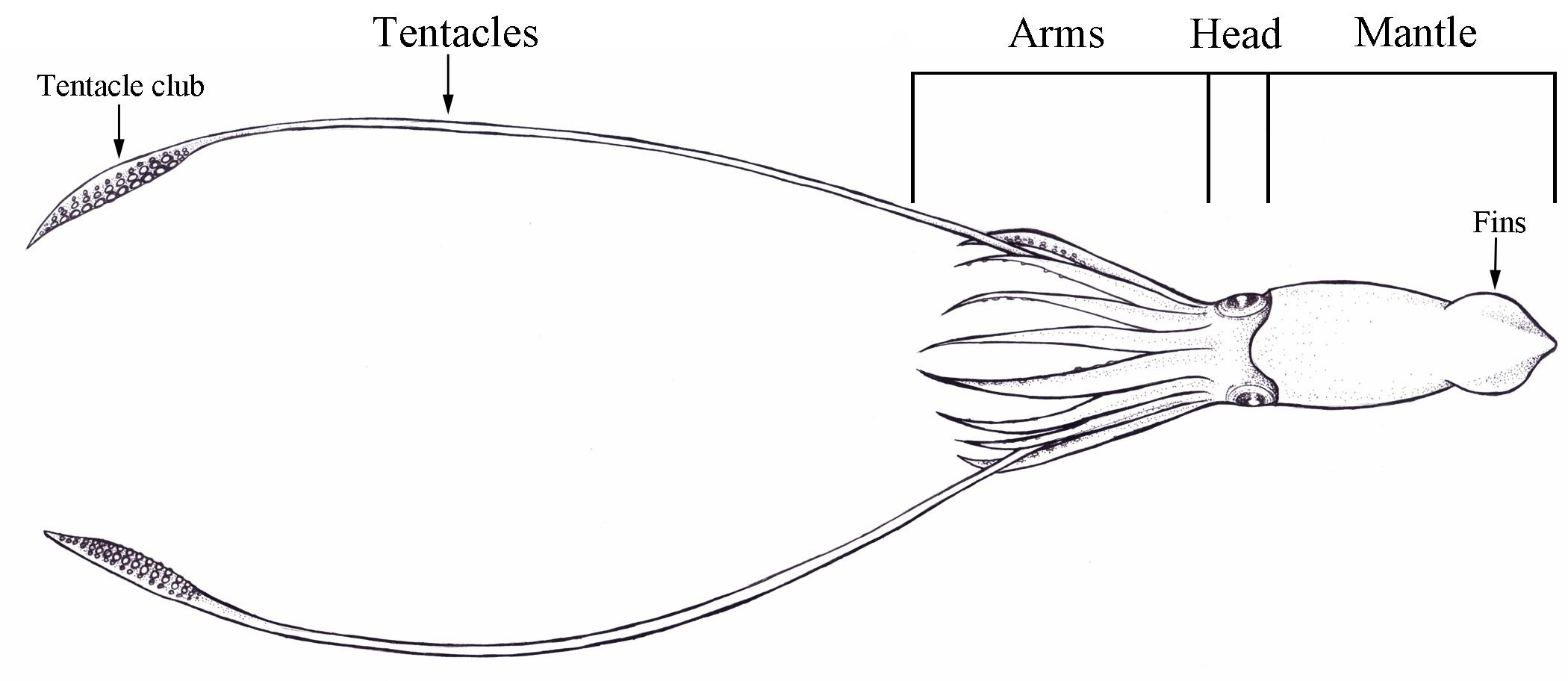 One squid to rule them all | Journal of Geek Studies