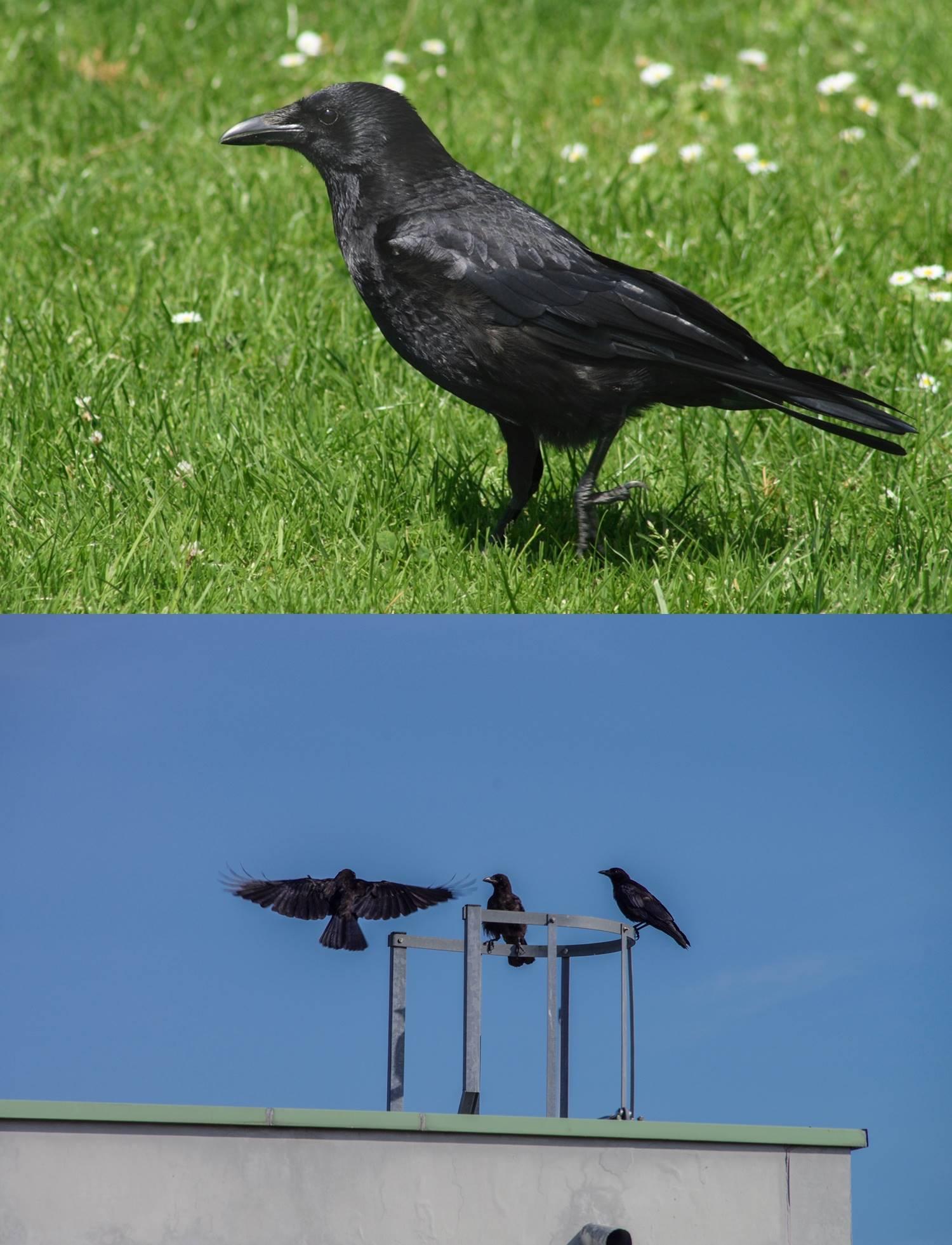 Assasins Creed Crows Concept Art