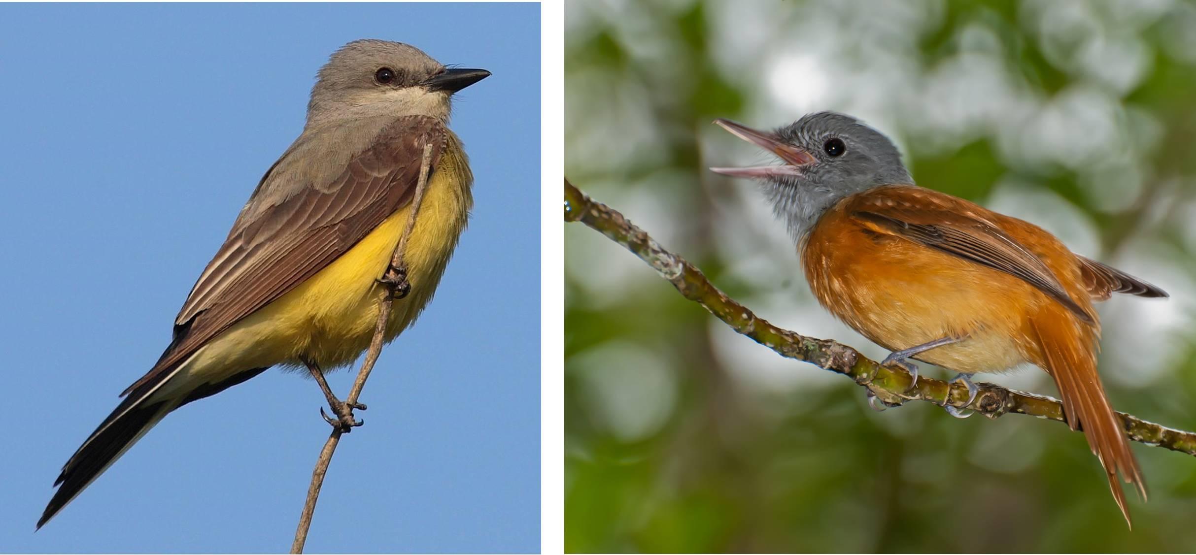 Bird biodiversity in heavy metal songs | Journal of Geek Studies